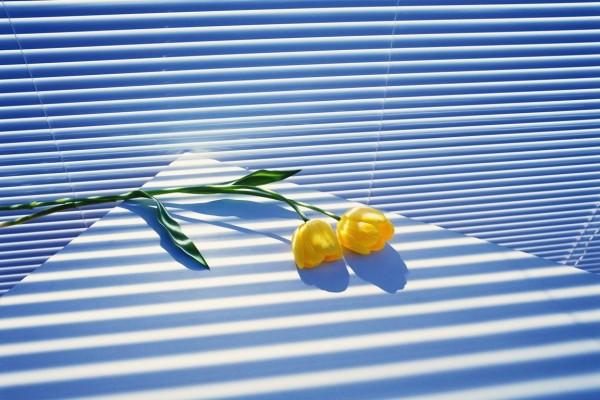 Dos tulipanes amarillos sobre la mesa