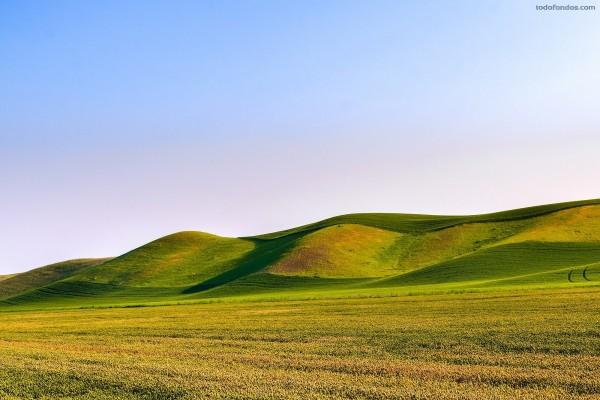 Dunas de hierba