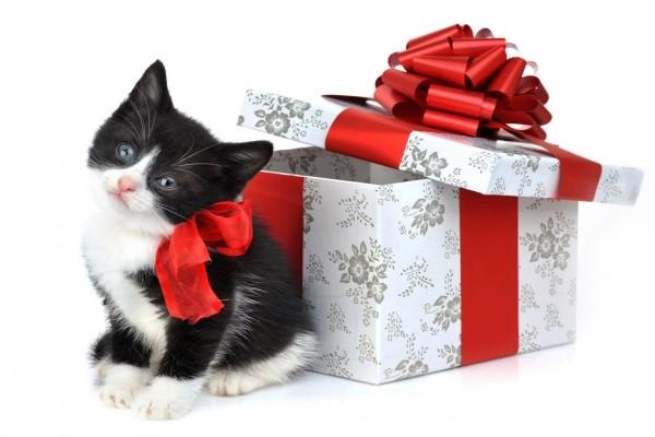 Un gatito de regalo
