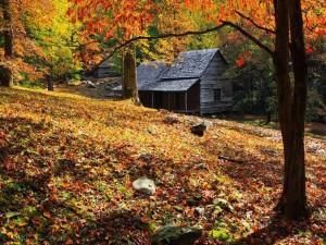 Una vieja cabaña en el campo