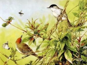 Postal: Pájaros e insectos