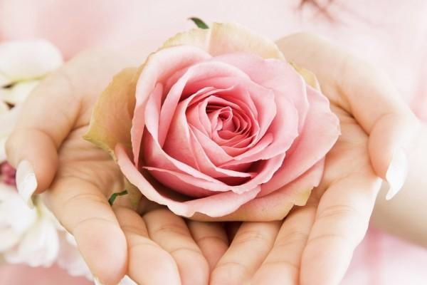 Dos manos sosteniendo una rosa