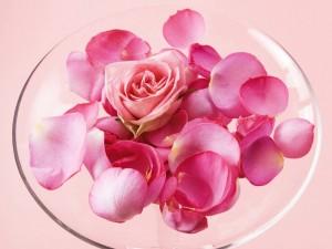 Una rosa y pétalos en un plato