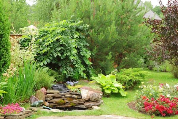 Un jardín con plantas variadas