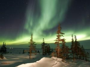 Postal: La Aurora Boreal sobre un paisaje helado