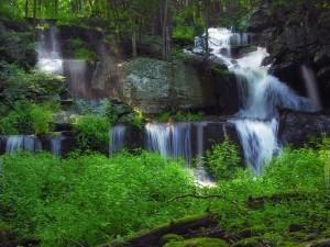 Cascadas de agua cayendo por la piedra en un bosque verde y frondoso