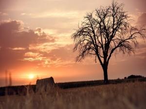 Postal: Árbol seco en el Jura de Suabia (Schwäbische Alb), en Alemania