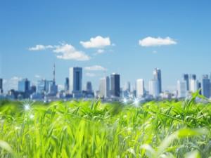 Hierba verde cerca de la ciudad