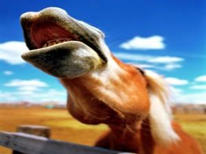 Postal: El relincho de un caballo