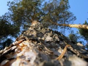 Corteza seca del tronco de un árbol