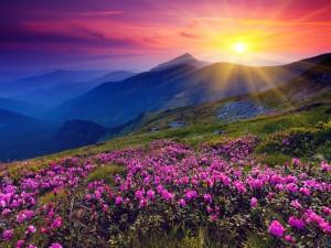 Postal: Flores silvestres presenciando el amanecer
