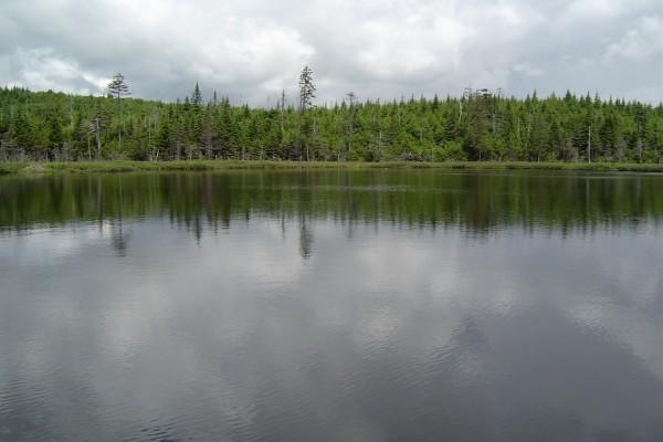 Lago rodeado de pinos