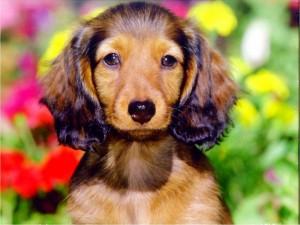 Postal: Perro sosteniendo la mirada