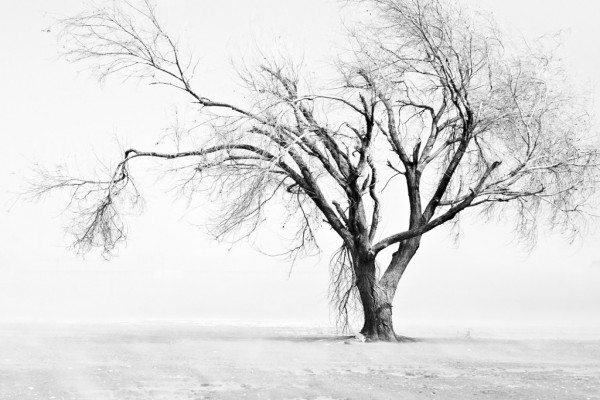 Árbol sin hojas, en blanco y negro