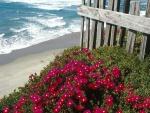 Flores rojas a pie de playa