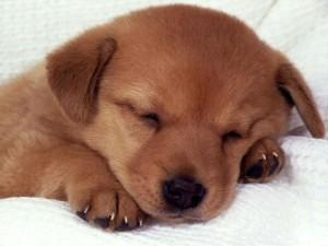 Postal: Perrito dormilón