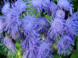 Extrañas flores púrpuras