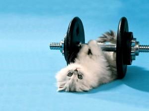Gatito blanco haciendo pesas