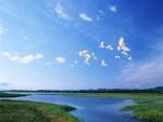 Palomas blancas volando bajo un cielo azul