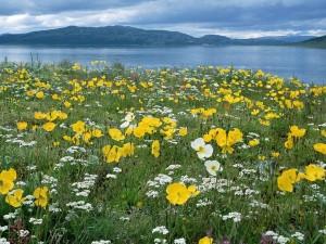 Campo de flores a orillas del agua