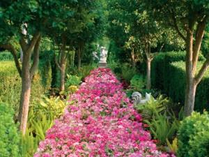 Postal: Camino de flores rosas