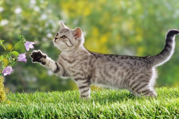 Gatito curioso con unas flores