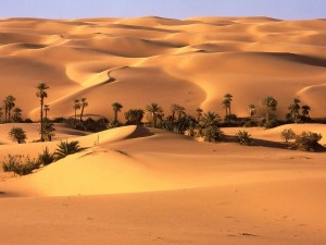 Postal: Palmeras en el desierto
