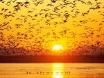 Aves levantando el vuelo al atardecer