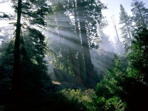 Postal: Rayos de sol entrando en el bosque
