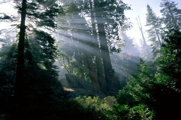 Rayos de sol entrando en el bosque