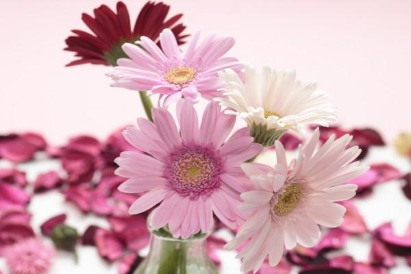 Gerberas en un florero