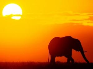 Elefante bajo el sol de la sabana africana