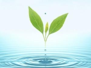 Postal: Agua y vida