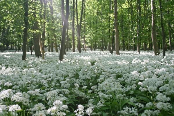 Bosque de flores blancas