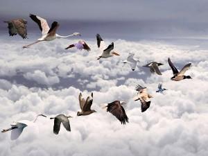 Postal: Diferentes especies de aves volando juntas en el cielo