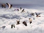 Diferentes especies de aves volando juntas en el cielo