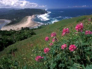 Postal: Flores cerca del mar