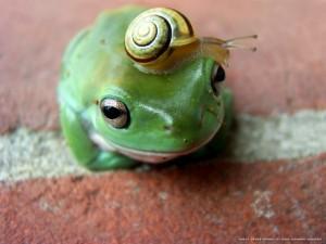 Una rana con un caracol de sombrero