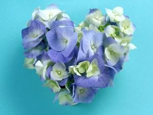 Postal: Corazón de hortensias