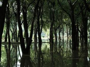 Un bosque inundado de agua