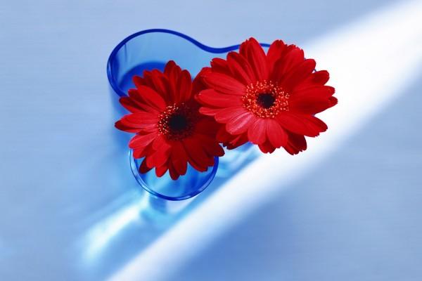 Gerberas rojas en un jarrón