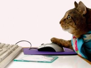 Gato programador