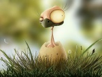 Polluelo con un ojo saltón