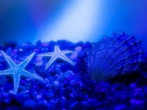 Fondo marino azulado