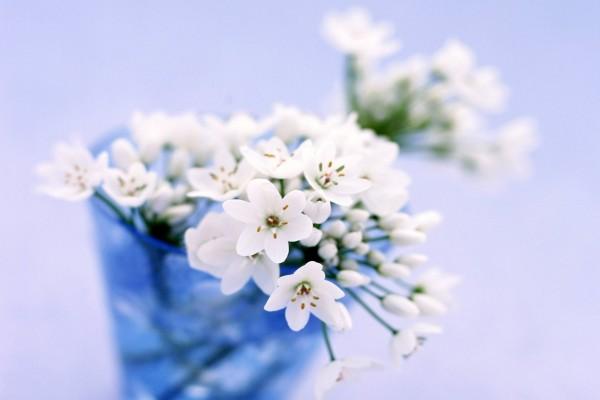 Fresias blancas