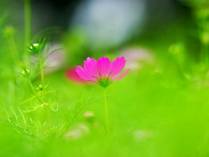 Postal: Florecilla rosa entre el verde