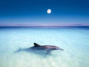 Postal: Delfín con la luna llena de fondo