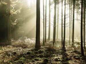Postal: Un bosque misterioso