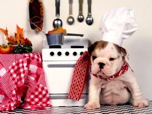 Postal: Bulldog cocinero