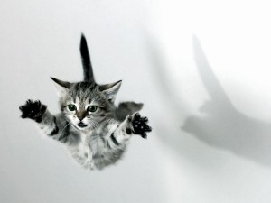 Postal: Gato volador